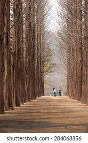 Nami Island of Love, South Korea