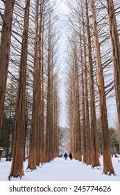 NAMI ISLAND - SOUTH KOREA - JANUARY 19: Tourists taking photos of the beautiful scenery around Nami Island on January 19, 2015, South Korea.