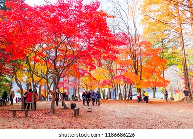 NAMI ISLAND,SOUTH KOREA - November 06,2014 Tourists in atumn on Nami Island, South Korea
