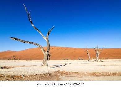 "Namib Desert, Deadvlei is a white clay pan located near the more famous salt pan of Sossusvlei, inside the Namib-Naukluft Park in Namibia. Also written DeadVlei or Dead Vlei, meaning ""dead marsh"""
