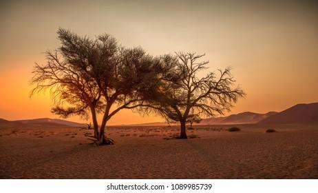 In the Namibia desert