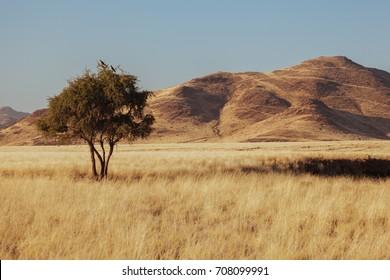 Namibia desert, Veld