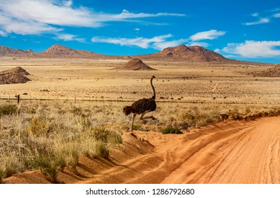 Namibia landscape with ostriche family crossing the sandy red road