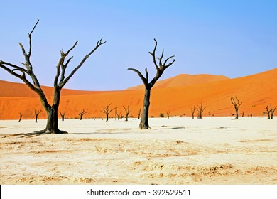 Namibia, Namib Desert, Dead Vlei
