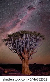 Namibia Quiver Tree Stars Travel Milky Way