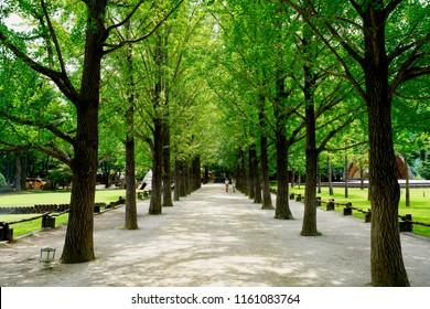 Namisum (Nami Island) , Chuncheon, South Korea - 23 July 2018: Landscape of a beautiful pathway under trees