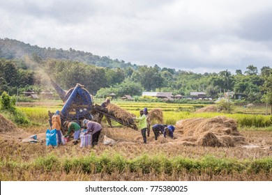 Nan, Thailand - October 15, 2017 : Threshing machine is a piece of farm equipment that threshes grain, it removes the seeds from the stalks and husks