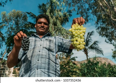 Nandi Hills, India - 12/06/2014: South Indian adult village man holding up black and green fresh grapes