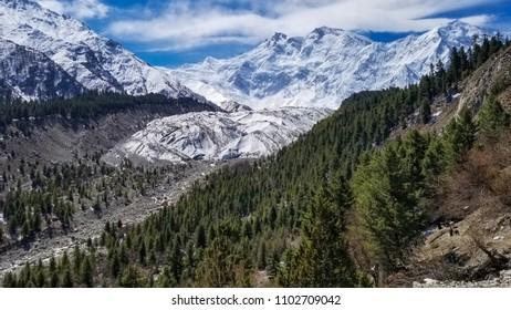 Nanga Parbat mountain with green pine under blue sky, Gilgit, Pakistan
