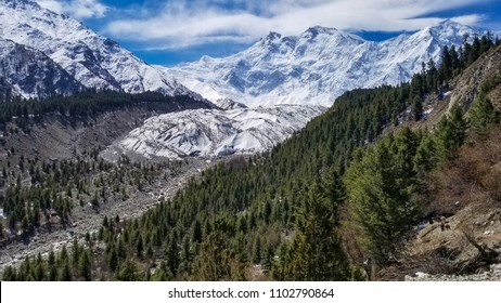 Nanga Parbat mountain with green pine tree along glacier under blue sky, Gilgit, Pakistan