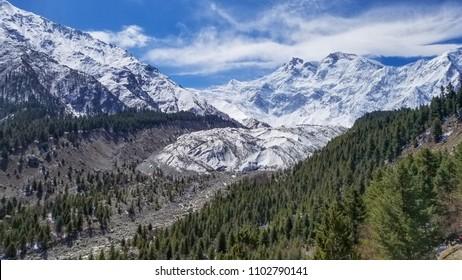 Nanga Parbat mountain peak with glacier and green pine forrest, Gilgit, Pakistan