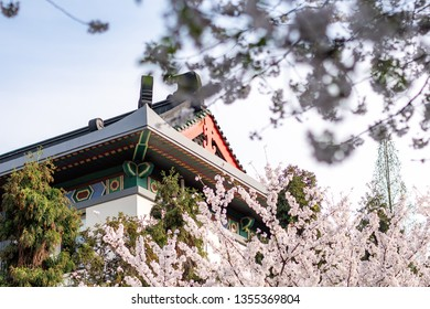 Nanjing, China - March 26, 2019 : Nanjing xuanwuhu park, all cherry blossoms in full bloom, is Nanjing's famous attractions in spring.