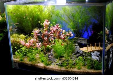 Nano aquarium contain fish, shrimp and aquatic plants. All were nicely