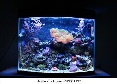Nano coral reef aquarium