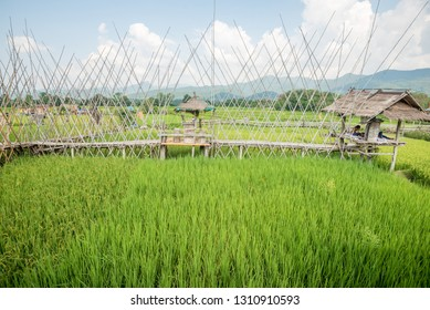 Nan,Thailand - October 8, 2018 : The decorated with rice field and bridges at Ban Tai Lue Coffee house in Pua District, Nan Province, Thailand.