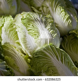 Napa cabbage. Light fall on full frame shot of rows of fresh green and white napa cabbage leaves.