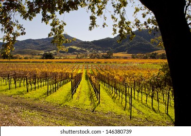 Napa Valley in Autumn