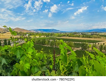 Napa Valley, CA USA - 08/06/2013 - Napa Valley, CA USA - Napa Valley Vineyards