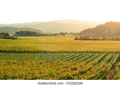 Napa Valley California in Autumn