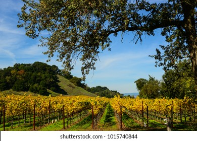 Napa Valley California Vineyard in the Fall