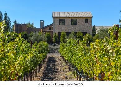 Napa Valley California Vineyard in the Fall
