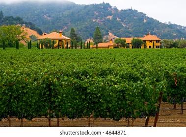 Napa Valley vineyard California