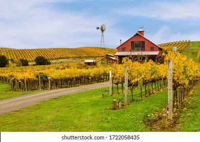 Napa Valley Vineyards in Autumn Colors, Red Barn, Windmill and Blue Sky.