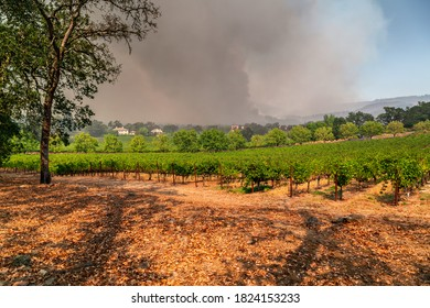 Napa Valley Vineyards Engulfed by Wildfire - Shutterstock ID 1824153233