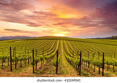 Napa Valley Wine Country Vineyards Spring Sunrise