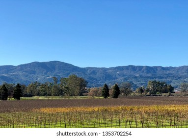 Napa vineyard landscape