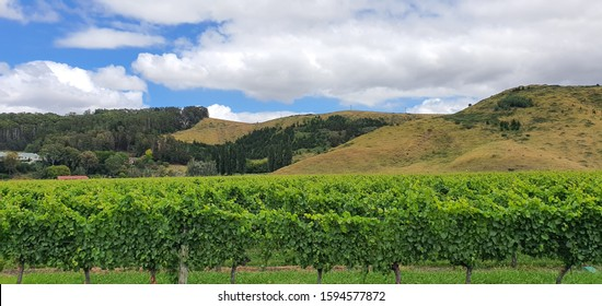 Napier, North Island / New Zealand - December 21, 2019: The vineyards, apple farms and winery estates of Napier
