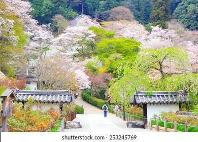NARA, JAPAN - April 13: Spring spot in Nara at the ancient temple, 'Hasedera' with natural park to relax and enjoy on April 13, 2014 at Hasedera,Nara, Japan.