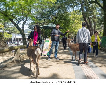 NARA, JAPAN - APRIL 13: Visitors visit Nara park on April 13, 2018 in Nara, Japan. The park is a large park in central Nara. Established in 1880 and It is home to hundreds of freely roaming deer.