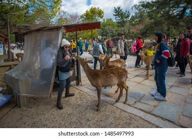 NARA, JAPAN - April 15, 2019 : tourists feed wild sika deers with crackers cookies in Nara park, Nara, Japan