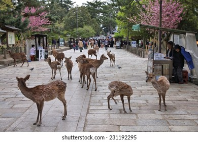 NARA, JAPAN - APRIL 26, 2012: Visitors feed wild deer in Nara, Japan. Nara is a major tourism destination in Japan - former capital city and currently UNESCO World Heritage Site.
