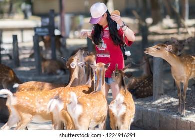 Nara / Japan - August 17th 2018: Young woman is feeding deer crackers (Shika-senbei) to a crowd of playful deer in Nara park.