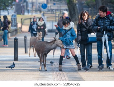 NARA, JAPAN - FEB 8, 2015: young Japanese females taking picture of a sika deer in Nara Park. Nara is famous for Japanese deer and their close relation to human beings.