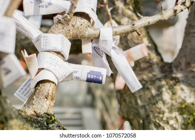 Nara, Japan, February 17 2018 : Closeup of Japanease Omikuji fortunes paper tied to rope tree brunch for good luck in Nara Japanese shrine.