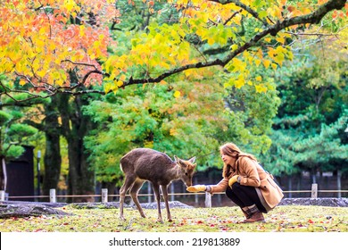 NARA, JAPAN - Nov 21: Visitors feed wild deer on April 21, 2013 in Nara, Japan. Nara is a major tourism destination in Japan - former capita city and currently UNESCO World Heritage Site.