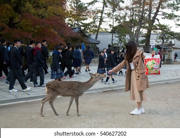 NARA, JAPAN - NOVEMBER 22, 2016: An unknown girl feeding a wild deer. Nara is a major tourism destination in Japan, it is the former capital, and currently a UNESCO World Heritage Site.