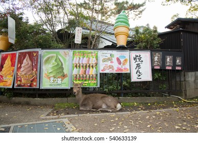 NARA, JAPAN - NOVEMBER 22, 2016: A wild deer in Nara Park. Nara is a major tourism destination in Japan, it is the former capital, and currently a UNESCO World Heritage Site.