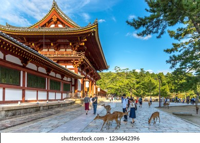 Nara, Japan - Sep 18th 2018 - Locals and Tourists playing with the deers of Nara city near by a temple in Nara, Japan