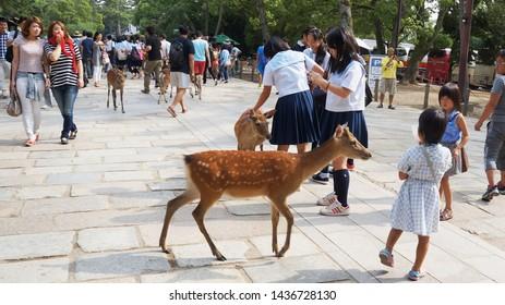 "NARA, NARA PREFECTURE, JAPAN - JUNE 14, 2014: Children interacting and feeding sika deers ""shika senbei"" (deer crackers) in Nara Park. These animals are protected as Nara's national treasures."