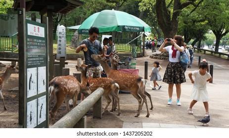 "NARA, NARA PREFECTURE, JAPAN - JUNE 14, 2014: Visitors interacting and feeding sika deers ""shika senbei"" (deer crackers) in Nara Park. These animals are protected as Nara's national treasures."