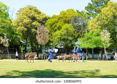 nara,japan - April 19,2018 : Nara is the capital city of Nara Prefecture located in the Kansai region of Japan.