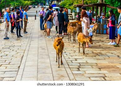 nara,japan - September 21,2017 : Nara is the capital city of Nara Prefecture located in the Kansai region of Japan.