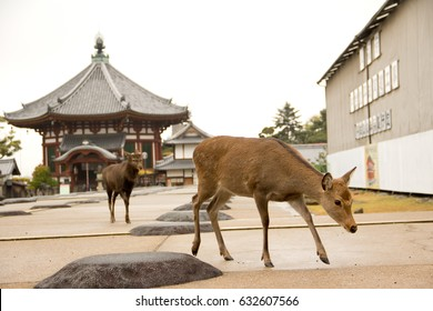 Nara's deer in kofukuji temple , nara  japan.