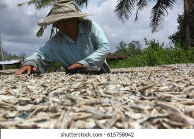 NARATIWAT,THAILAND- ,FEB,2017 :A women  laying out his catch to dry in the sun on February,11,2017 in Naratiwat, Thailand.