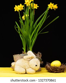 Narcissi Easter mood. Bright yellow daffodils in sackcloth pot, bird nest with big yellow egg standing nearby and toy bunny on wood yellow table isolated on black background. Easter holiday still life
