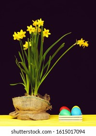 Narcissi flowers in sackcloth and colourful painted Easter eggs in box made of wood placed on yellow wooden table isolated on black background. Traditional Easter still life composition